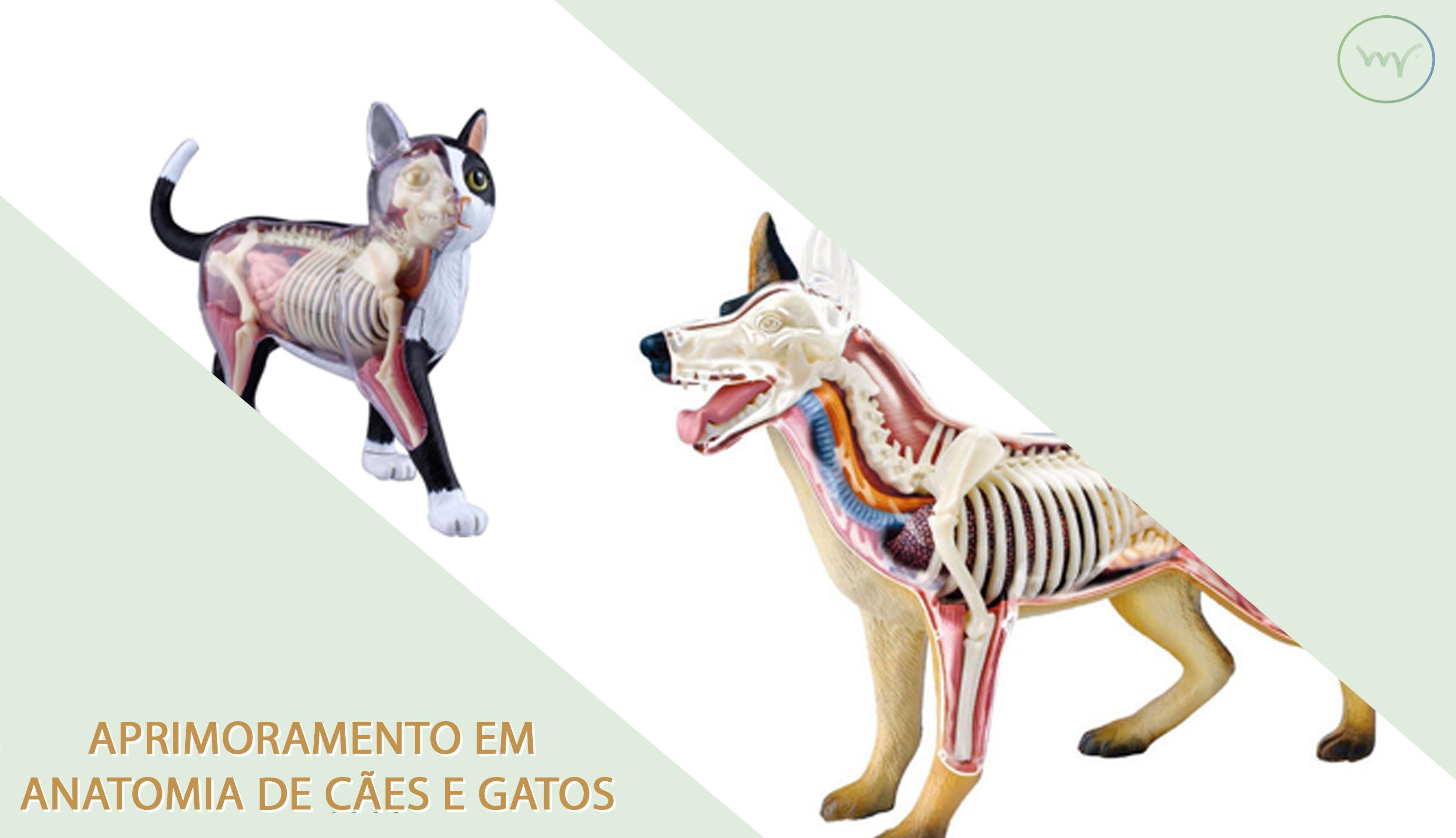 Contemporáneo Cachorro Anatomía Femenina Friso - Imágenes de ...